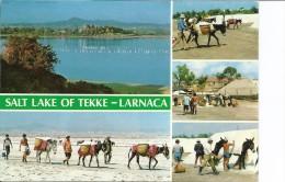 Salt Lake Of Tekke  -  Larnaca  Cyprus   B-2891 - Cyprus