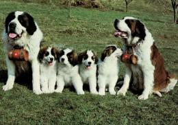DOG  -  SAINT BERNARD  / P419 / - Hunde