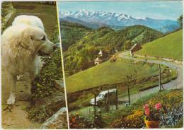 Sites Pyreneens: SIMCA ARONDE COMMERCIALE & Le CHIEN Des Pyrénées - Le Col De Port - France - Auto/Car/Voiture - Voitures De Tourisme