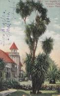 Etats-Unis - Los Angeles - Draceana Palm, Chester Place - Los Angeles