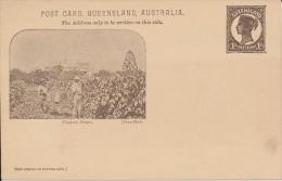 Australie - Queensland - Vin - Vignoble - Vins & Alcools