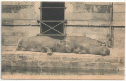 75 - PARIS 5 - Au Jardin Des Plantes - Les Hippopotames Kako Et Liza - Royer 64 - Arrondissement: 05