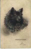 DOGS - POMERANIAN By MAUD WEST WATSON - Chiens