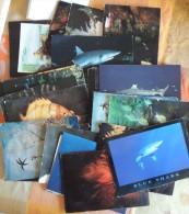 Lot De 36 Cartes Semi-modernes Et Modernes Sur La Faune Sous-marine (poissons, Requins, Hippocampes, Huitre) - Cartoline