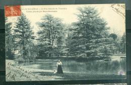 Parc De SAINT CLOUD -Jardins Réservés Du Trocadéro - Cèdres Plantés Par Marie Antoinette - Daq108 - Saint Cloud