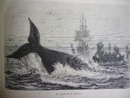 La Péche A La Baleine , Gravure De Trichon D'aprés Dessin De Yan'Dargent 1876 - Documents Historiques
