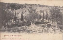 C1920 JARDIN DE GETHSEMANE - JERUSALEM - Israel