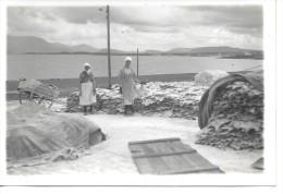 ISLANDE - Séchage De La Morue - Island