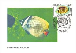 Carte Postale - Chaetodon Collare - Timbre 1e Jour Correspondant - Timbres (représentations)