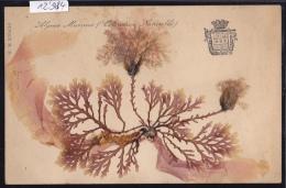 Algue Marine, Coloration Naturelle : Collée ; Monaco (12´984) - Musée Océanographique