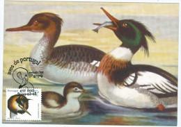 Portugal Maximum - Great Crested Grebe - Mergulhão-de-crista - Podiceps Cristatus - Aves De Portugal Faro FD 2000 - Otros