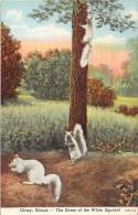 11773 Olney, Illinois, The Home Of The White Squirrel - United States
