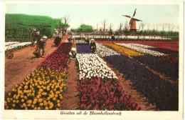 Groeten Uit De Bloembollenstreek - & Windmill - Windmühlen