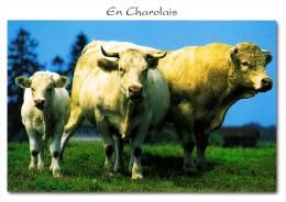 """EN CHAROLAIS Bourgogne Du Sud (Saône Et Loire) - Veau, Vache, Taureau De """"Race Charolaise"""" - M.G. Éditions - Charolles"""