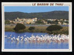 CPM 34 LE BASSIN DE THAU Flamants Roses Vers Balaruc Le Vieux - Francia