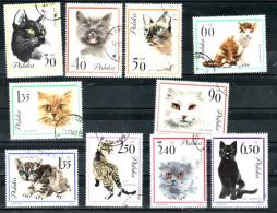 K9 Polanda1964 Used Cat Katze Pet Lovers Haustieren - Timbres