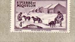 St PIERRE  Et MIQUELON : Attelage De Chien - Vue De St Pierre -Type De 1938 Sans RF - - St.Pierre & Miquelon