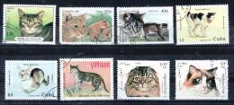 K9 Cat Katze Pet Lovers Haustieren - Mix 2 -  Beautifull Stamps - Timbres