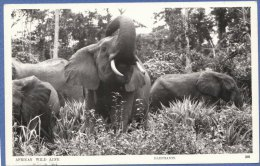 ANIMALI Della SAVANA -AFRICA - F/P B/N Lucido  -   Elefanti (11 1110) - Éléphants