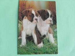 DOGUES FRANCAIS - Honden