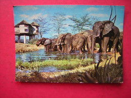 CPM ELEPHANT DRINKING AT LILY POND   VOYAGEE - Elefantes