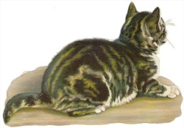 JOLIE CHROMO DECOUPI LEGEREMENT GAUFFRE : CHAT - Animals