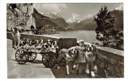 CPSM TRANSPORTS ATTELAGE VOITURE A CHIENS - Chien Saint Bernard à FLUELEN (Suisse-Uri) - Wagengespanne