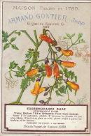 Chromo Armand Gontier Graine Jardin D´essai Fleur Plante à Fontenay Aux Roses Eccremocarpe - Unclassified