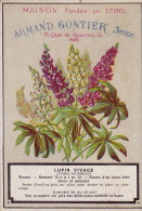 Chromo Armand Gontier Graine Jardin D´essai Fleur Plante à Fontenay Aux Roses Lupin - Unclassified