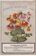 Chromo Armand Gontier Graine Jardin D´essai Fleur Plante à Fontenay Aux Roses Calceolaire - Unclassified
