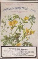 Chromo Armand Gontier Graine Jardin D´essai Fleur Plante à Fontenay Aux Roses Capucine Des Canaries - Unclassified
