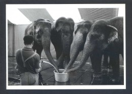 Foto: Heini Stucki *Cirque Knie 1985* Ed. News Productions Nº 55438. Nueva. - Other Photographers