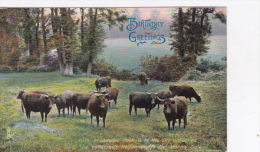 HIGHLAND CATTLE.  TUCK PUBL. 4447 - Unclassified