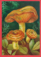133842 / Lactarius Deliciosus Edel-Reizker Mushrooms Champignons Pilze By PANCHEVA - 1987 Bulgaria Bulgarie Bulgarien - Non Classés