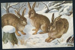 Rabbits, Winter - O.G.Z.-L. 277/1535  ----- Postcard Not Traveled - Animaux & Faune
