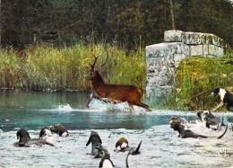 CHASSE - Dans Les Forêts De France D'après Barbier Petit  (Chasse A Cour -chiens Cerf ) *PRIX FIXE - Caccia