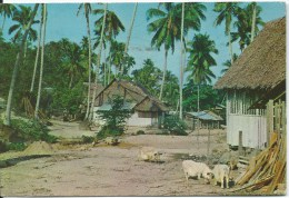 Rural Area Pig Farm   5149  Pub By S.W. Singapore    Used To Australia Front & Back Shown - Singapore