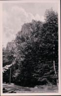 Ilsenburg - Der Ilsestein - Harz - Ilsenburg
