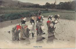 JAPON - Paddy-field - Other