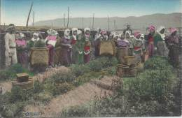 Japon - Women Emploged To Pick Up Tea-LeavesGoingto Stort Thair Works. - Other