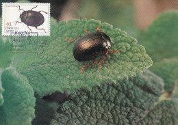 D15193 CARTE MAXIMUM CARD 1984 PORTUGAL ACORES - CHRYSOMELA BANKSI CP ORIGINAL - Insecten