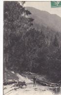 22877 LA COMBE DE VEYLON  -Allevard -LL 72 -forestier Bois Tronc - Allevard