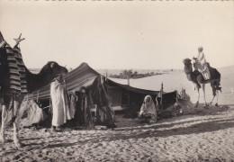 Afrique Du Nord,algérie,tente Nomade,sahara,devant La Haimoh,chameau,édition La Cigogne Alger,rare - Algérie