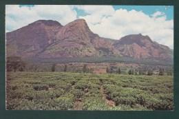 MALAWI - Mlanje Mountain And Tea Estate ( 2 Scans ) - Malawi
