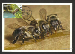 Portugal Madère Apiculture Abeille Abeilles Eau Miel Carte Maximum 2013 Madeira Beekeeping Bee Bees Water Honey Maxicard - Cartes-maximum (CM)
