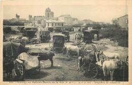 13 SAINTES MARIES DE LA MER - Pelerinage - Campement De Bohémiens - Saintes Maries De La Mer