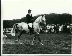 Pressefoto Muskat Motiv Pferd Dressur-Reiten Schimmel Aumühle Aumühle 1957 (3) Cheval Horse - Pferde