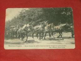 MILITARIA  - BRASSCHAAT - POLYGONE - Douze Chevaux De Nation Tirant Un Chariot Chargé D'un Canon De 28 -  (2 Scans) - Militaria