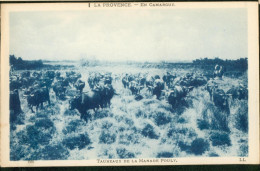 En Camargue - Taureaux De La Manade Pouly - Other Municipalities