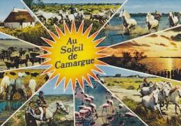 Cp , 13 , Au Soleil De CAMARGUE , Multi-Vues - Saintes Maries De La Mer
